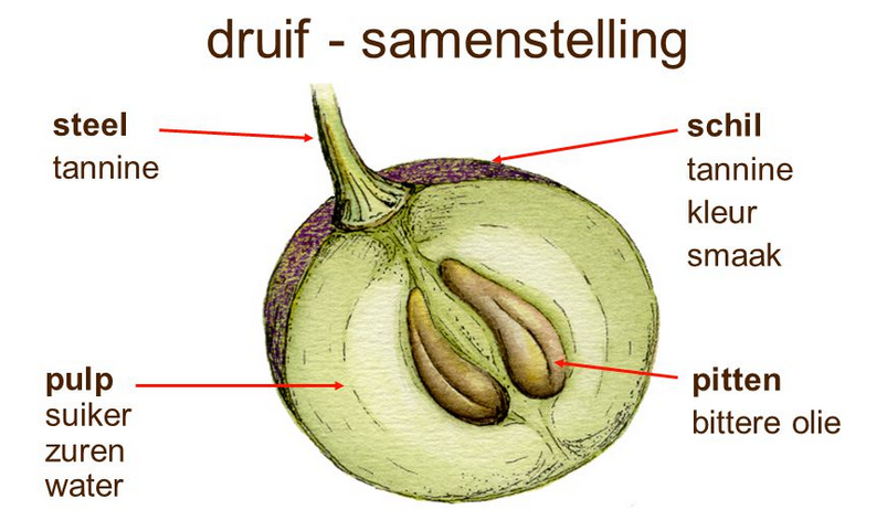 druif tannine